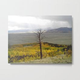 The past still stands tall in forest of  fall Metal Print