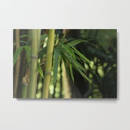 Bamboo Thicket Metal Print