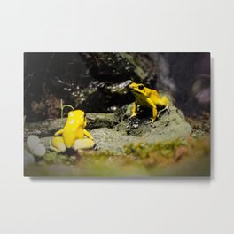 Golden Dart Frog Metal Print