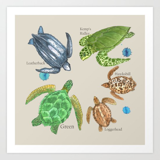 Sea Turtle Types Art Print