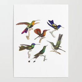 Six Colorful Hummingbirds Poster