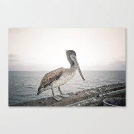 Boardwalk Pelican Canvas Print