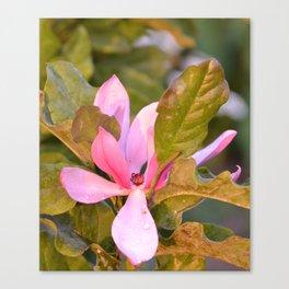 Japanese Magnolia Blossom Canvas Print