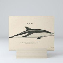 W Sidney Berridge - A Book of Whales (1900) - Figure 33: Dusky Dolphin Mini Art Print