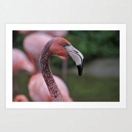 Pink Flamingos Portrait Art Print