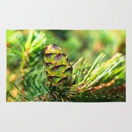 Dwarf cone Rug
