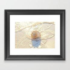 The Whelk I Framed Art Print