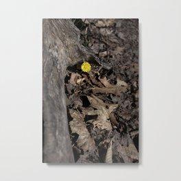 Hello Spring! Metal Print
