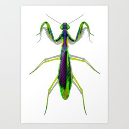 Green And Purple Mant Art Print