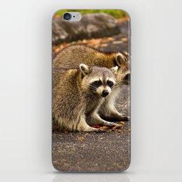 Raccoons eating cat food iPhone Skin