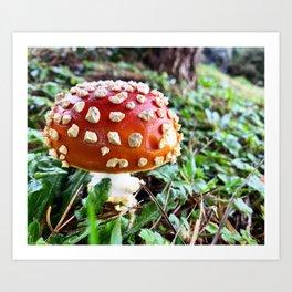 Baby Fly Agaric Mushroom by Seasons Kaz Sparks Art Print