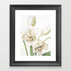 VI. Vintage Flowers Botanical Print by Pierre-Joseph Redouté - Crinum Jagus Framed Art Print