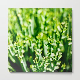Green Tops Metal Print