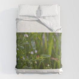 Still  Comforters