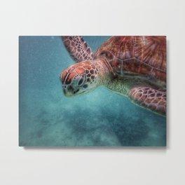 Turtle Mauritius Metal Print