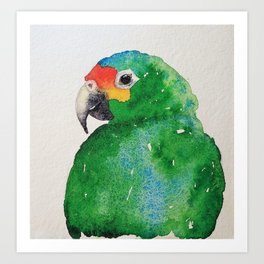 Red-lored parrot Art Print