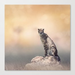 Young Cheetah sitting on a rock Canvas Print