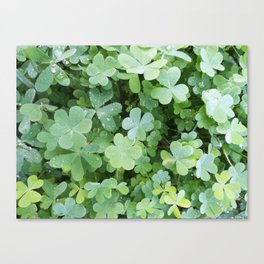 Clovers all over Canvas Print