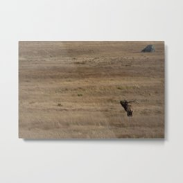 Lone Elk Bugles - Estes Park, Colorado Metal Print