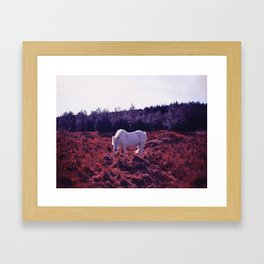The Bloodhorse Graze by Úna Blue Framed Art Print