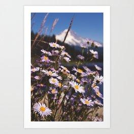 Mt. Hood's Daisies Art Print
