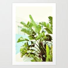 Banana Palms Art Print