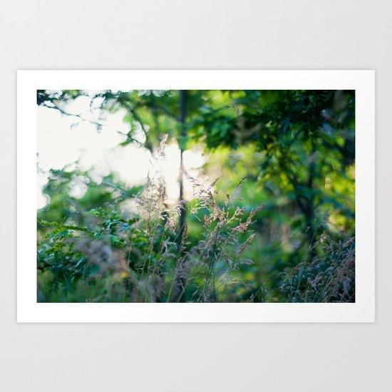 Summer Light Art Print