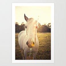 Sunlit Horse Art Print