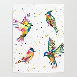 Four Colorful Birds Poster