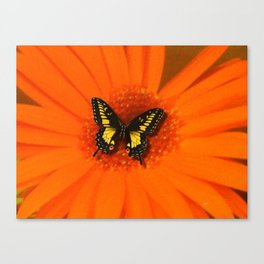 Orange Flower and the butterfly Canvas Print