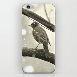 American Robin (Turdus migratorius) in Winter iPhone Skin