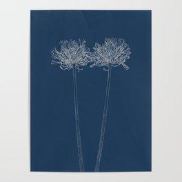Agapanthus Blueprint Poster