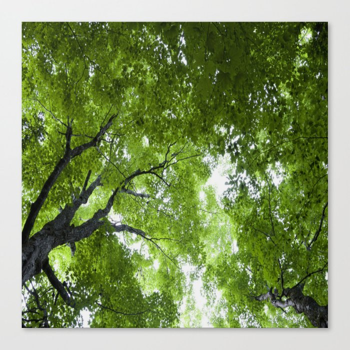 Leaves and Lace Canvas Print