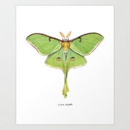 Luna Moth (Actias luna) II Art Print