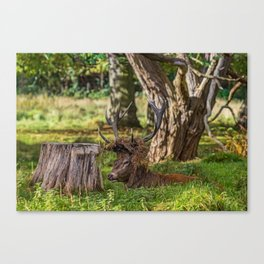 The Stag. Canvas Print