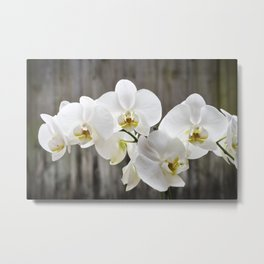 Pure Orchid Metal Print