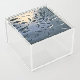 School of Fish 2 Acrylic Box