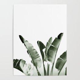 Traveler palm Poster