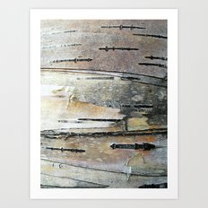 Paper Birch Art Print