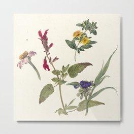 Pieter Ernst Hendrik Praetorius - Studies of wild flowers (1837) Metal Print