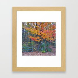 Autumn Trail at Lums Framed Art Print