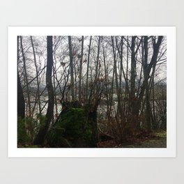 North Shore Through the February Trees Art Print
