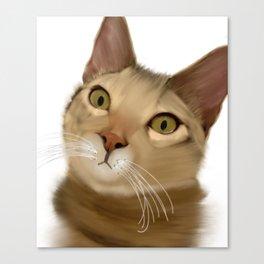 Joey Kitten Canvas Print