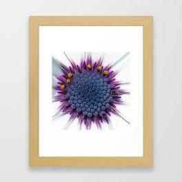 Stunning African Daisy Tropical Flower Macro Framed Art Print