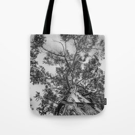 The old eucalyptus tree Tote Bag