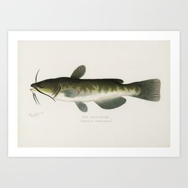 Bullhead; (Amiurus Nebulosus) illustrated by Sherman F. Denton (1856-1937) from Game Birds and Fishe Art Print