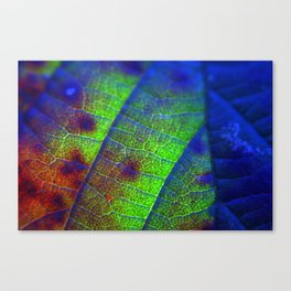 Three Colour Leaf Canvas Print