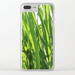 Large reeds leaves in a cane grove Clear iPhone Case