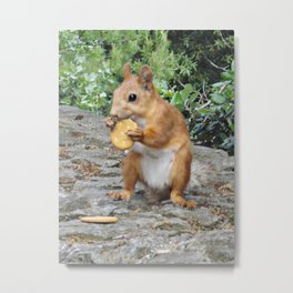 Cracker Metal Print