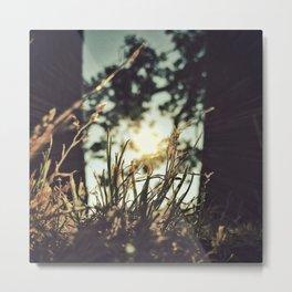 Summer [REQ] Metal Print